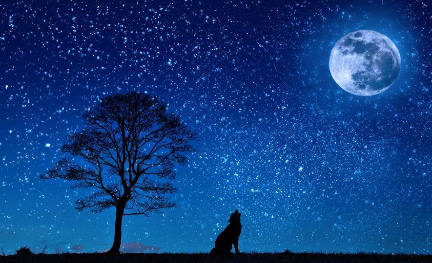 Η σονάτα του σεληνόφωτος, Ρίτσος
