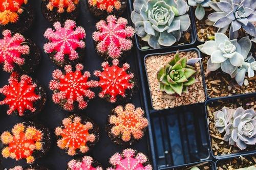 9 αγαπημένα λουλούδια για το μπαλκόνι σου & πώς να τα φροντίσεις!