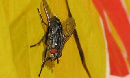 Η μύγα, από τη Μαρία Σκαμπαρδώνη