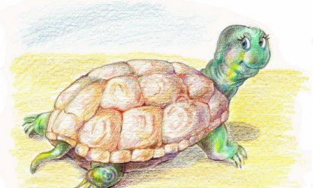 Ο Μπίλυ το σοφό χελωνάκι και ο κορωνοϊός