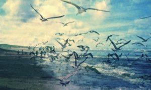 Τα άσπρα Πουλιά, του Ουίλιαμ Γέιτς